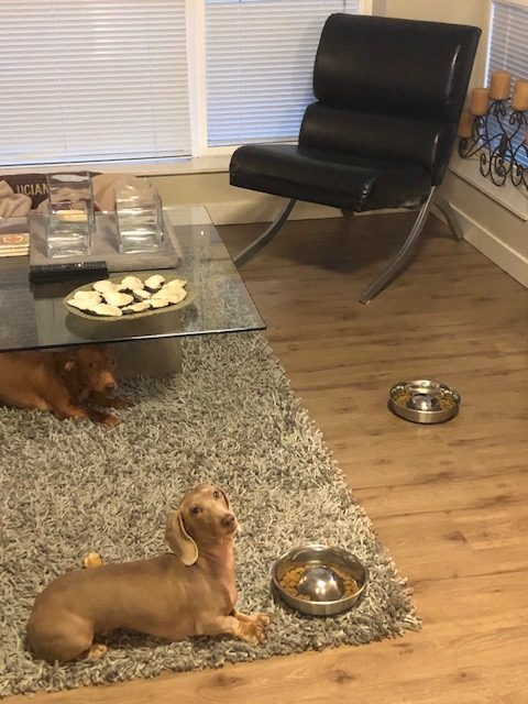 demonstration of controlled feeding